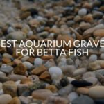 Best Aquarium Gravel For Betta Fish