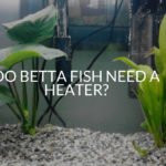 Do Betta Fish Need A Heater? (Complete Guide)