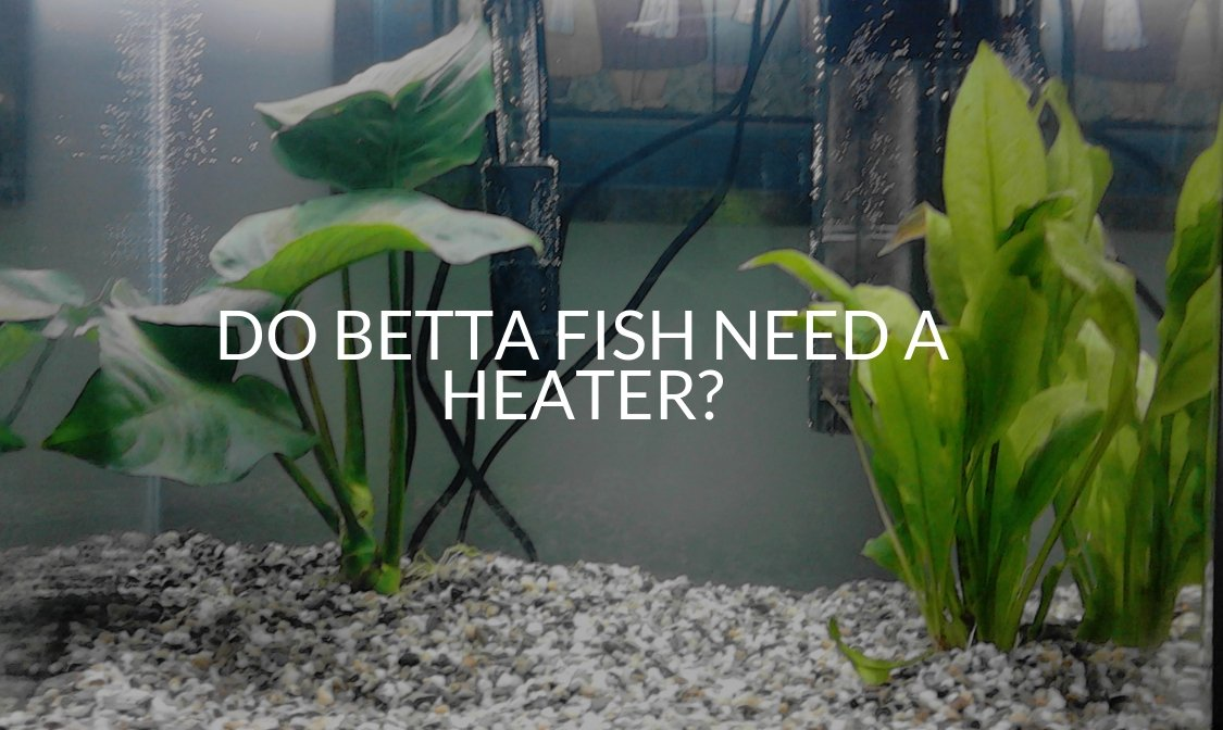 Tank Setup Archives Betta Care Fish Guide