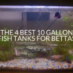 The 4 Best 10 Gallon Fish Tanks For Bettas