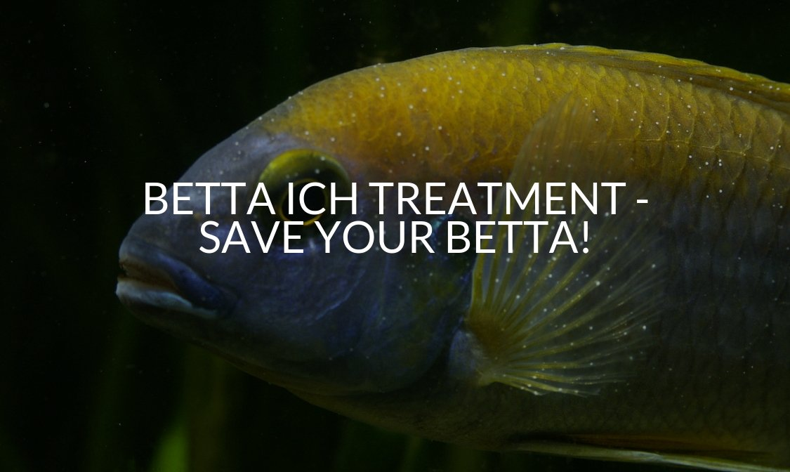 Betta Ich Treatment - Save Your Betta!.jpg