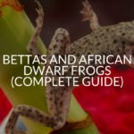 Bettas And African Dwarf Frogs (Complete Guide)
