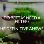 Do Bettas Need A Filter? The Definitive Answer