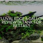 Fluval Edge 6 Gallon Review (A Tank For Bettas?)