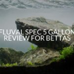 Fluval Spec 5 Gallon Review For Bettas