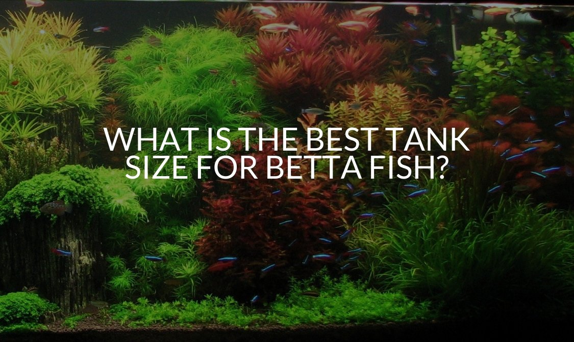 What Is The Best Tank Size For Betta Fish_