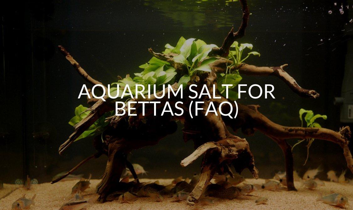 Aquarium Salt For Bettas (FAQ)
