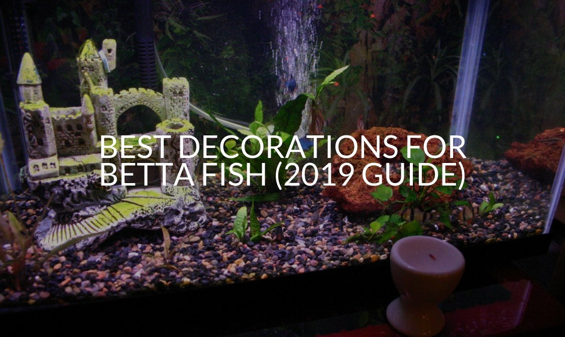 Best Decorations For Betta Fish (2019 Guide)