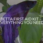 Betta First Aid Kit - Everything You Need