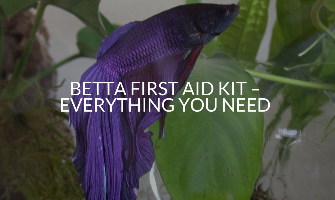 Betta First Aid Kit – Everything You Need