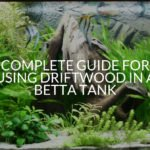 Complete Guide For Using Driftwood In A Betta Tank