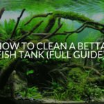 How To Clean A Betta Fish Tank (FULL GUIDE)