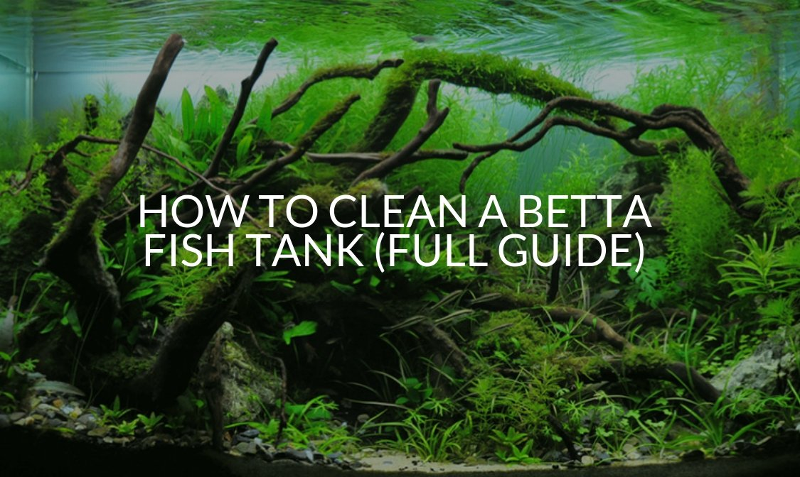 HOW TO CLEAN A BETTA FISH TANK (FULL GUIDE) (1)