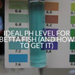 Ideal pH Level For Betta Fish (And How To Get It)