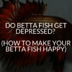 DO BETTA FISH GET DEPRESSED_ (HOW TO MAKE YOUR BETTA FISH HAPPY)