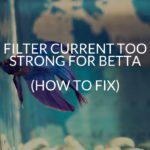 Filter Current Too Strong For Betta (How To Fix)