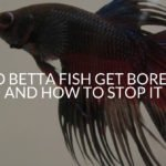 Do Betta Fish Get Bored_ And How To Stop It