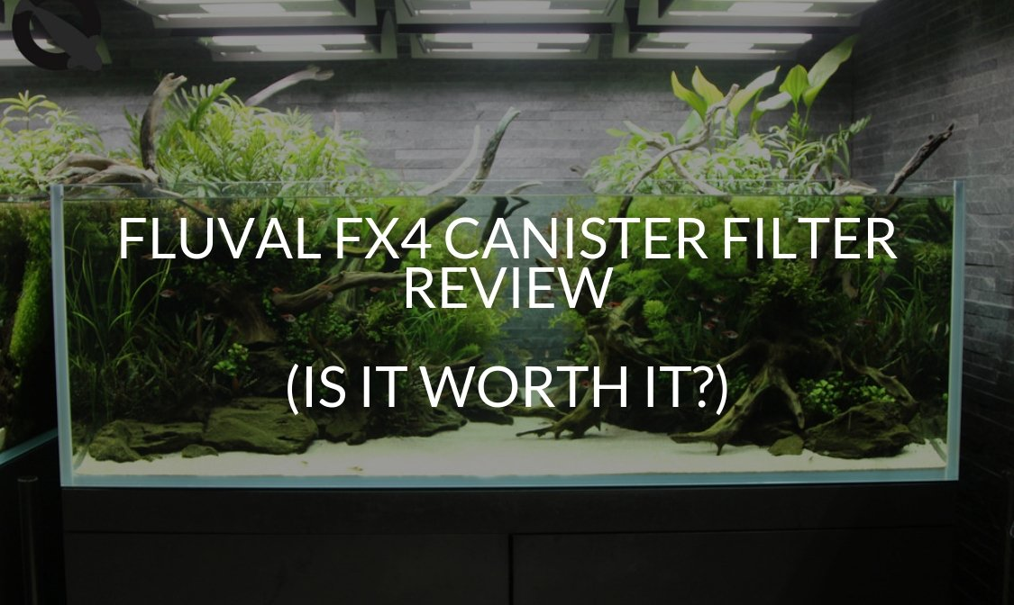 Fluval Fx4 Canister Filter Review (Is It Worth It?) - Betta