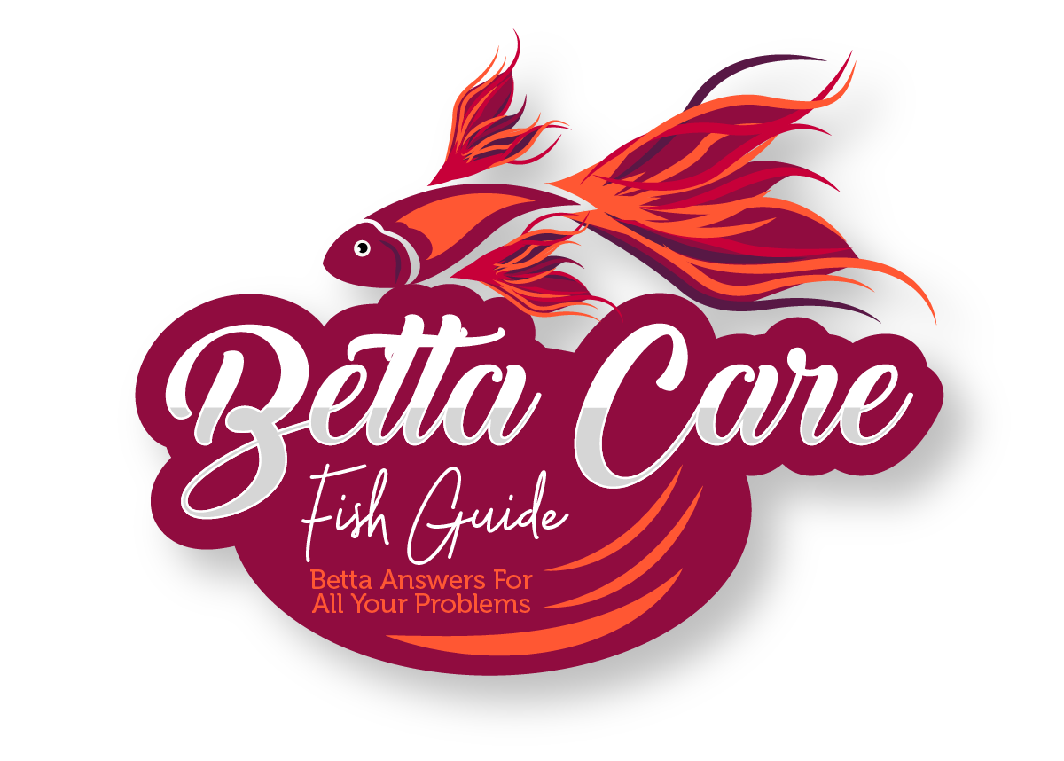 Betta Care Fish Guide