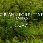 Best Plants For Betta Fish Tanks (Top 7)