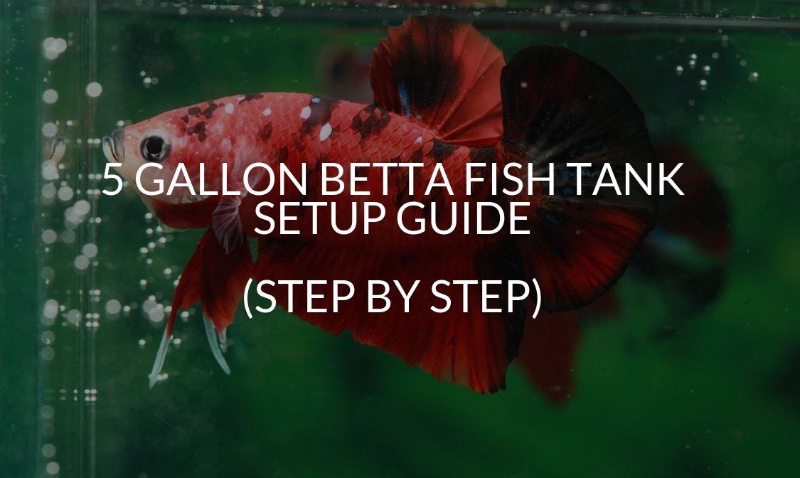 5 Gallon Betta Fish Tank Setup Guide (Step By Step)