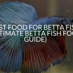 Best Food For Betta Fish (Ultimate Betta Fish Food Guide)