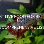 Best Live Food For Betta Fish (A Comprehensive List)