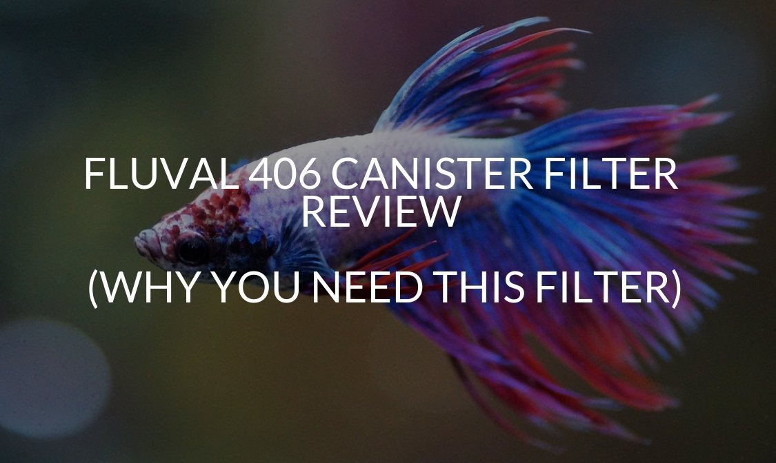 Fluval 406 Canister Filter Review (Why You NEED This Filter)