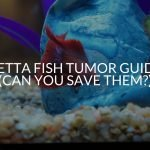 Betta Fish Tumor Guide (Can You Save Them_)