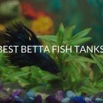 Best Betta Fish Tanks (Top 5 Fish Tanks For Bettas)