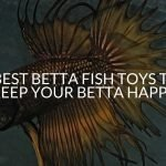Best Betta Fish Toys To Keep Your Betta Happy!