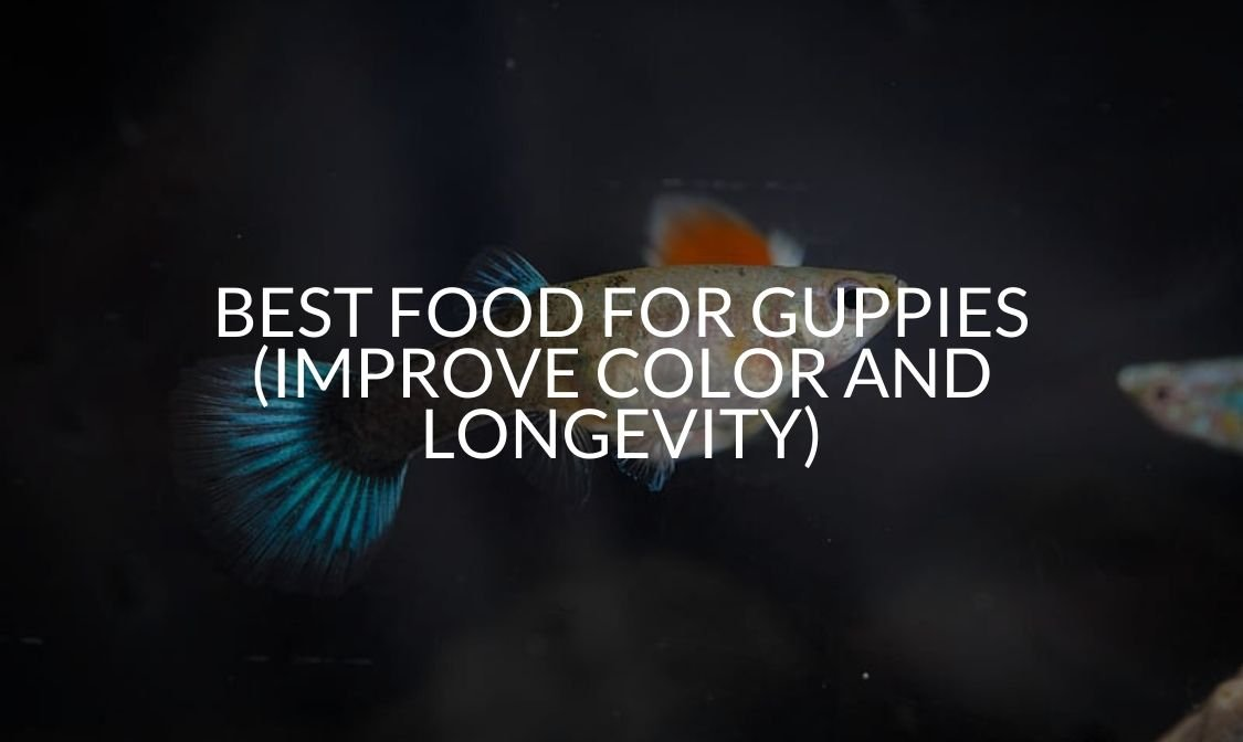 Best Food For Guppies (Improve Color And Longevity)