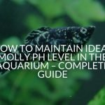 How to Maintain Ideal Molly pH Level in the Aquarium – Complete Guide