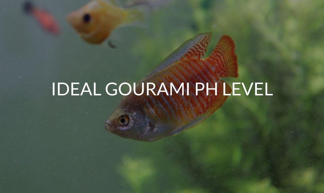 Ideal Gourami pH Level