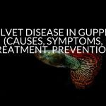 Velvet Disease In Guppies (Causes, Symptoms, Treatment, Prevention)