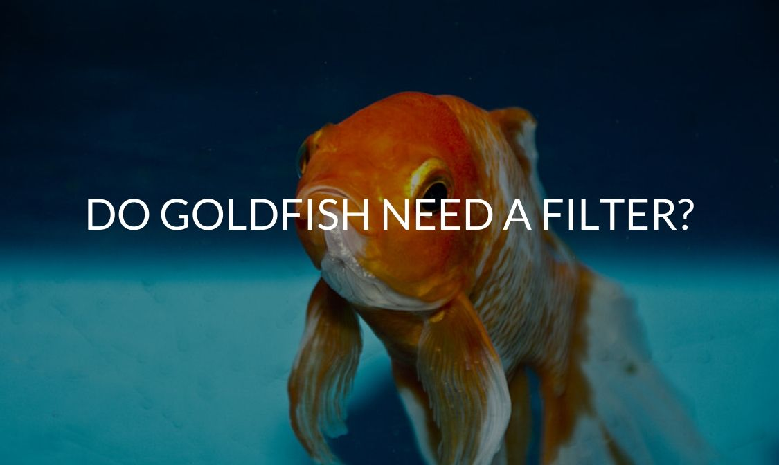 Do Goldfish Need A Filter_