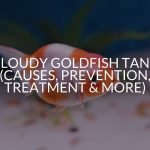 Cloudy Goldfish Tank (Causes, Prevention, Treatment & More)