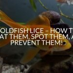 Goldfish Lice - How to Treat Them, Spot Them, and Prevent Them!