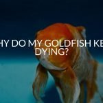 Why Do My Goldfish Keep Dying? (And What To Do)