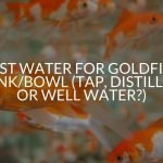 Best Water For Goldfish Tank/Bowl (Tap, Distilled, Or Well Water?)