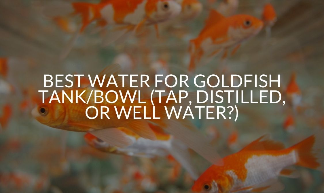 Best Water For Goldfish Tank_Bowl (Tap, Distilled, Or Well Water_)