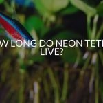 How Long Do Neon Tetras Live? (& How To Improve Their Lifespan)
