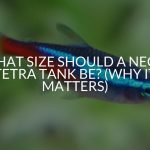 What Size Should A Neon Tetra Tank Be? (Why It Matters)