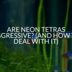 Are Neon Tetras Aggressive? (And Signs To Look For)