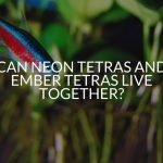 Can Neon Tetras And Ember Tetras Live Together?