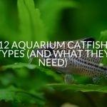 12 Aquarium Catfish Types (And What They Need)