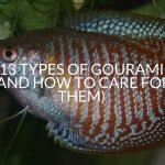 13 Types Of Gourami (And How To Care For Them)