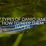 7 Types Of Danio (And How To Keep Them Happy)