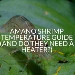 Amano Shrimp Temperature Guide (And Do They Need A Heater?)