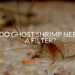 Do Ghost Shrimp Need A Filter? (And Which Is Best)
